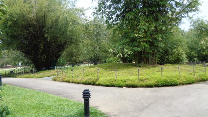 Menikmati Keindahan Dan Sejuknya Singapore Botanic Gardens