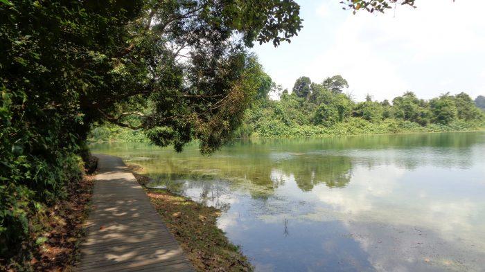 MacRitchie Nature Trail – Wisata Alam Di Negara Singapura