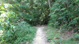 MacRitchie Nature Trail