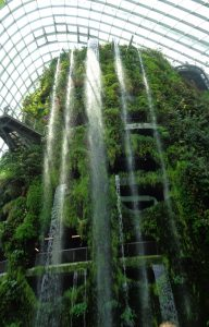 Cloud Forest - Garden By the Bay
