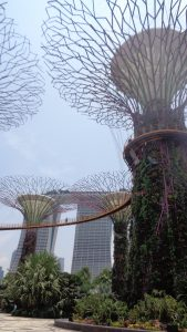 Supertree Grove - Garden By the Bay