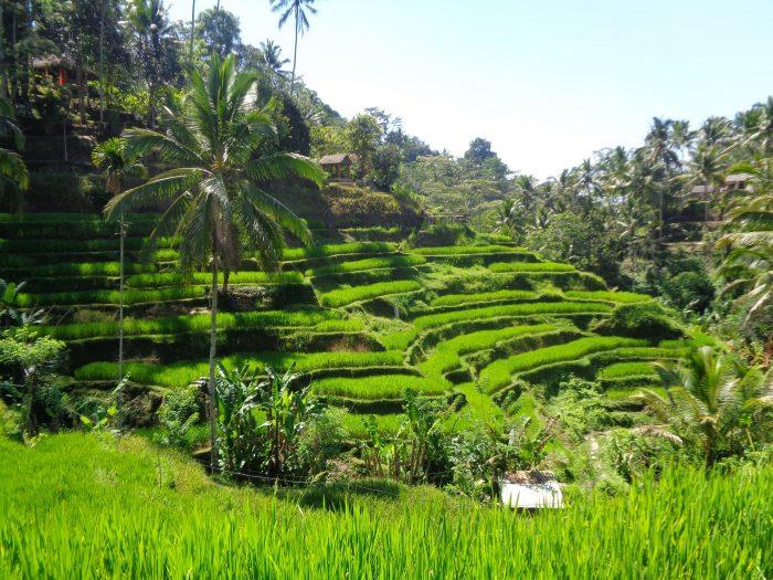5 Tempat Wisata di Ubud Bali